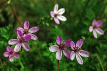 kwiatki2